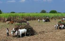 यूपी सरकार का दावा, 4 साल में 45.44 लाख गन्ना किसानों को 130,000 करोड़ रुपए का भुगतान- India TV Hindi