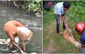 dog rescue- India TV Hindi