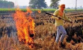 PAU Stubble Smoke, Stubble Smoke Punjab To Delhi, Stubble Smoke PAU, Stubble Smoke- India TV Hindi