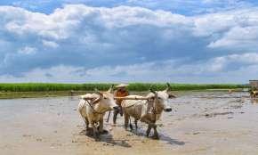 nitin gadkari launches Vedic paint soon to improve villager farmers economy । Vedic Paint: इस तरह कि- India TV Hindi