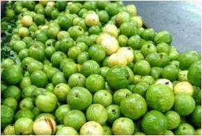 Guava- India TV Hindi