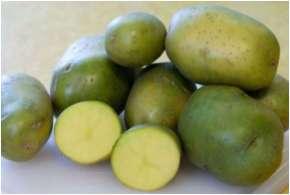 green potato- India TV Hindi