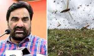 टिड्डी संकट को राष्ट्रीय आपदा घोषित किया जाए, सांसद हनुमान बेनीवाल ने पीएम मोदी को लिखा पत्र