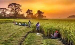 आपके खाते में शायद न आए किसान सम्मान निधि का पैसा, पौने 2 लाख किसानों पर भारी पड़ी ये छोटी गलती