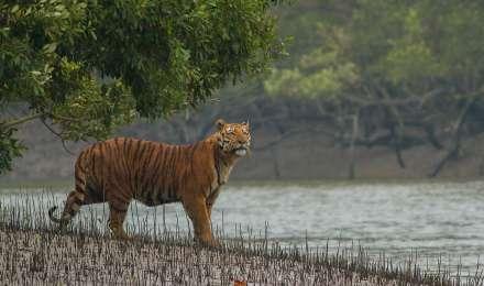 पश्चिम बंगाल में पर्यटन के लिए 23 सितंबर से खोले जाएंगे वन, मार्च से हैं बंद