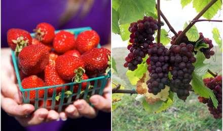 अमेरिका में फार्म के स्वादिष्ट और फ्रेश फल-सब्जियों का लें आनंद