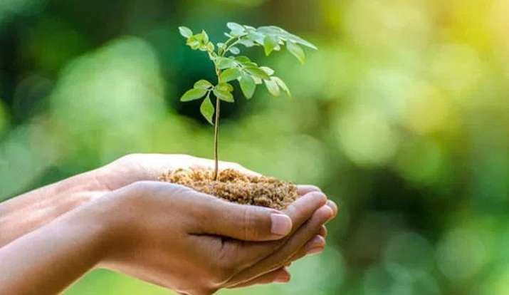 World Environment Day 2020: जानिए 5 जून को क्यो मनाया जाता है विश्व पर्यावरण दिवस, थीम और मैसेज