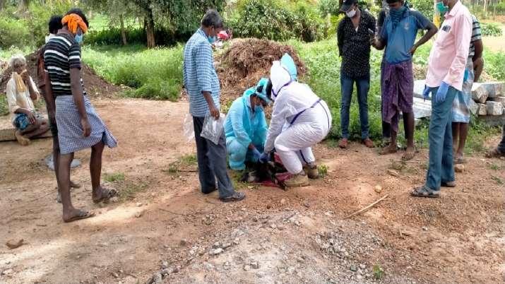 बकरियों की जांच करते स्वास्थ्यकर्मी