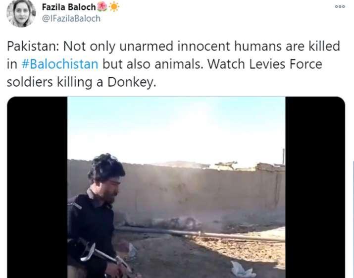 Pakistan Army Donkey, Pakistan Donkey, Balochistan Donkey Killed, Balochistan Donkey Killed Video
