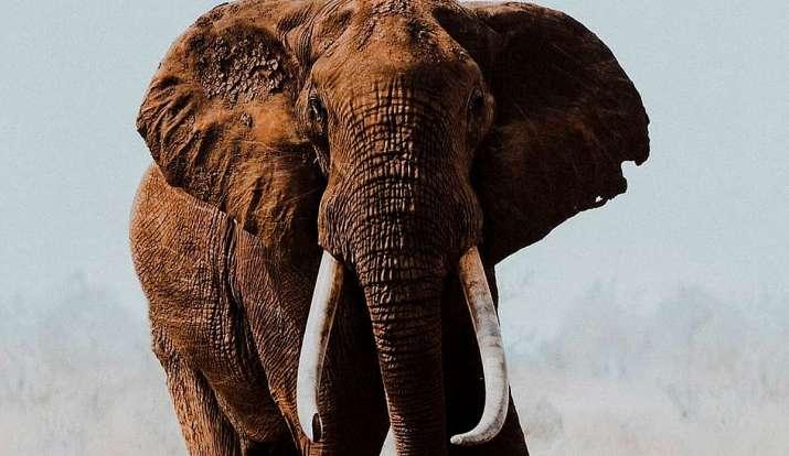 हाथी के साथ बर्बरता के बाद फूटा सेलेब्स का गुस्सा, पूछा- इंसानियत को क्या हो गया!