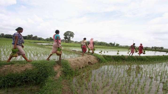 farmer wheat msp biometric system to be used in uttar pradesh bihar rajasthan odhisha किसानों तक सीध