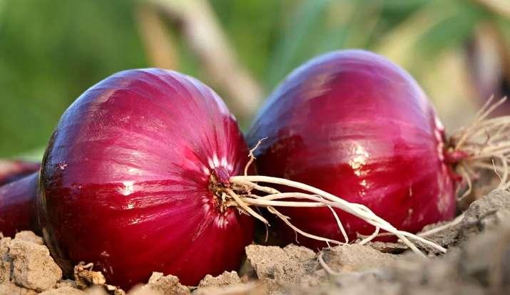 Kitchen Hacks easy ways to store onions at home onion ko store karne ka tarika