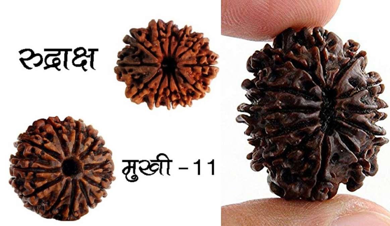 11 mukhi rudraksha beads gives prosperity happiness and know how to wear:  मंगलवार के दिन इस विधि से धारण करें 11 मुखी रुद्राक्ष, फिर देखें कैसे होती  है दिन गुनी रात चौगुनी