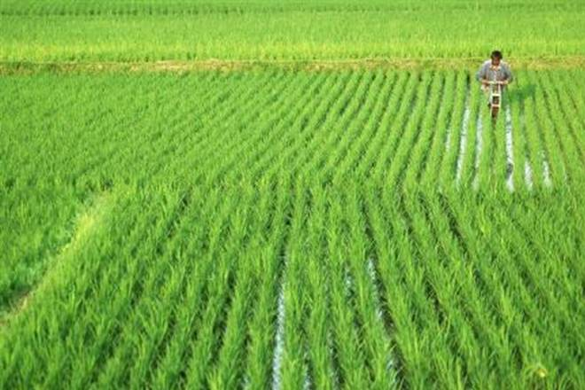 per drop more crop scheme- India TV Paisa