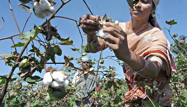 cotton production estimate for 2017-18- India TV Paisa