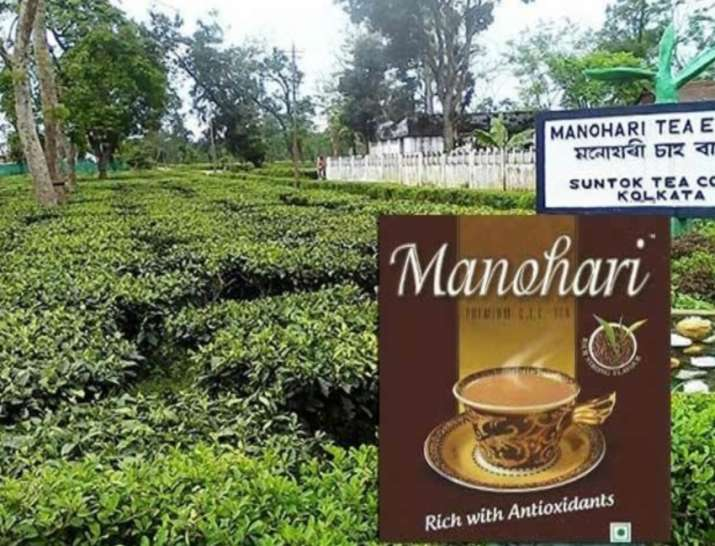 Assam Gold Tea Manohari- India TV Paisa