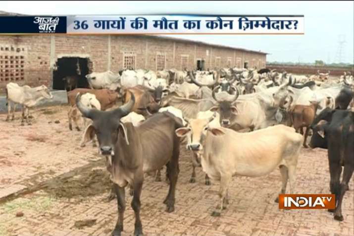 36 cows found dead at cowshed in Dwarka, Delhi govt orders inquiry- India TV