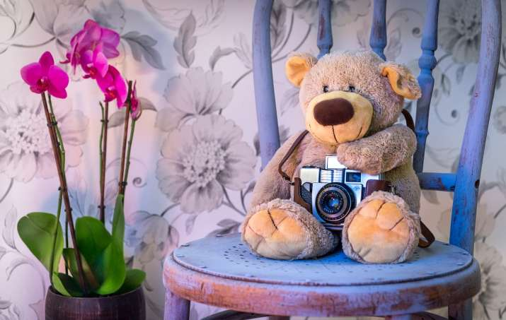 Teddy Day- India TV