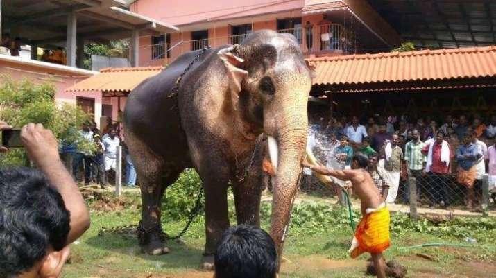 elephant- India TV