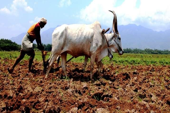 maharashtra farmers- India TV Hindi