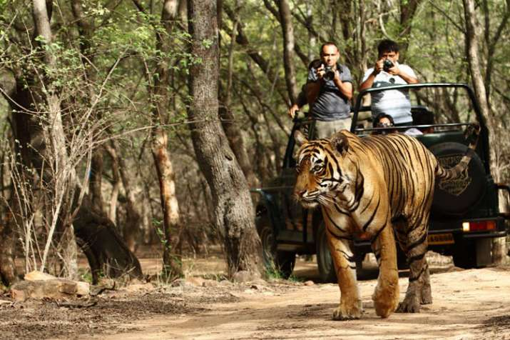 jim corbett- India TV