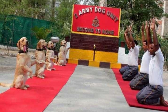 Rahul Gandhi tweets Army dog squad pic with 'New India'...- India TV Hindi