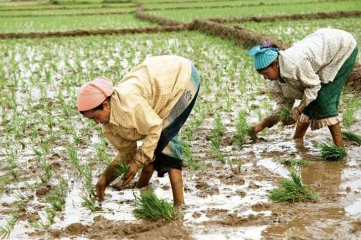 Kharif sowing hit by deficit rains; acreage down 27 per cent so far - India TV Paisa