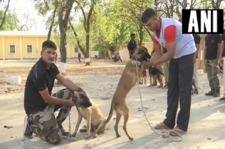 Police dogs- India TV Hindi