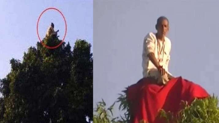 पेड़ के ऊपर बैठे 'बंदरिया बाबा' को देखने यूपी में उमड़ा जनसैलाब- India TV Hindi
