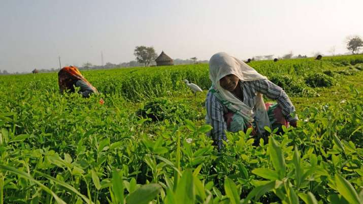 Kharif food grain crop production this year to be higher than last year's 141.71 mn tonnes- India TV Paisa