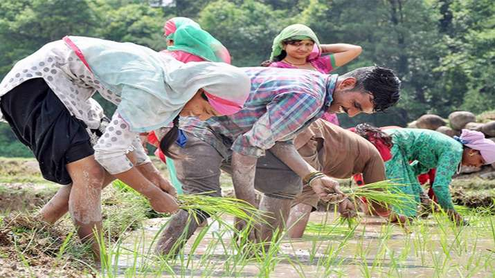 rice production- India TV Paisa
