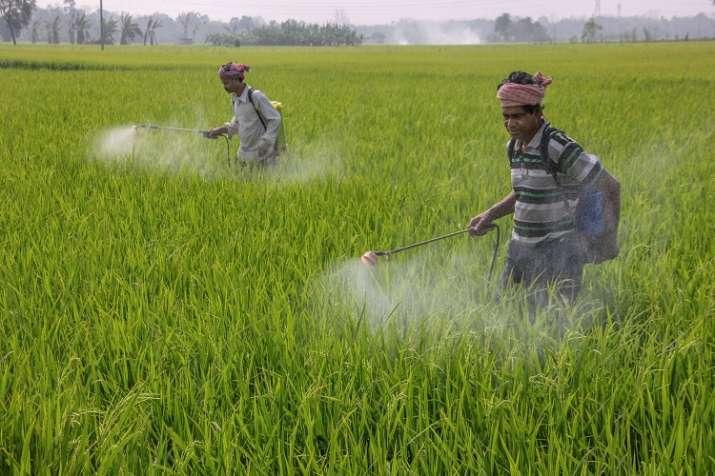 Fertilizer subsidy, Budget 2020, Direct Benefit Transfer, DBT- India TV Paisa