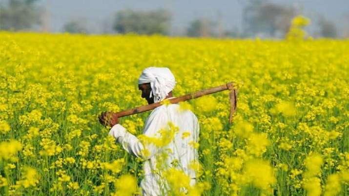 mustard production, mustard production in India- India TV Paisa