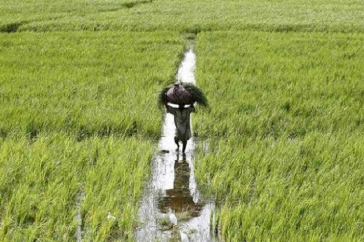 Crop Insurance- India TV Paisa