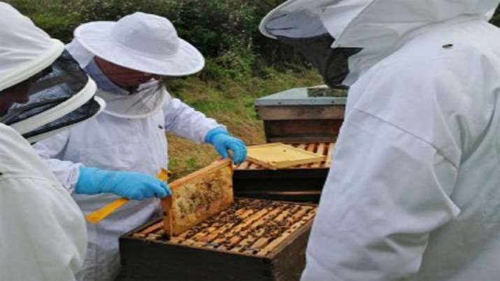 Beekeeping training to empower women- India TV Paisa
