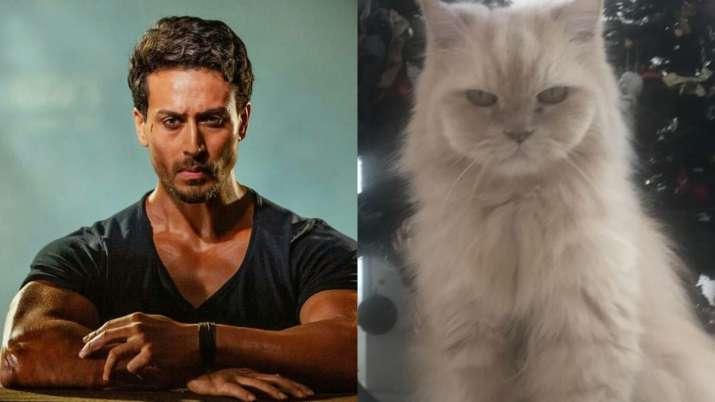 tiger shroff and his cat JD- India TV