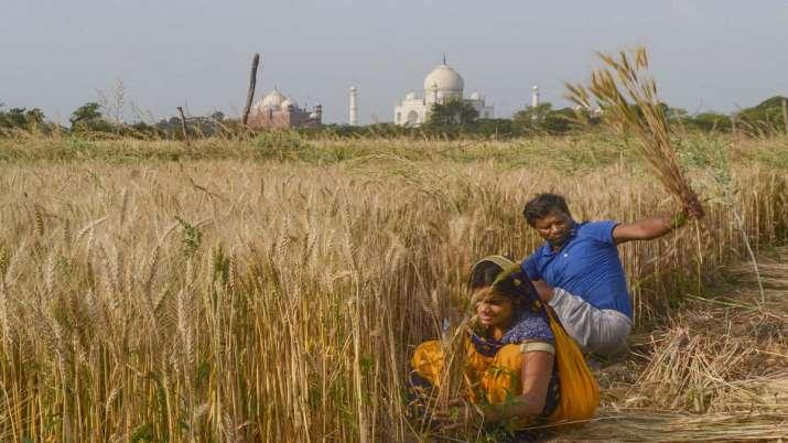 Supreme Court, Centre, farmers, harvest Rabi crop, police harassment - India TV Paisa