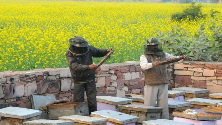 Rs 500 cr for beekeeping initiatives, will help 2 lakh beekeepers- India TV Paisa