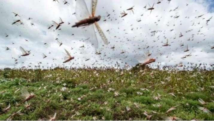 Locust- India TV Paisa