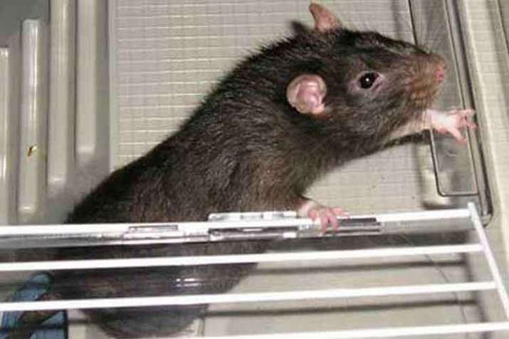 Photo of आगरा: अस्पताल में कैंसर मरीज के पैर का अंगूठा चूहे ने कुतरा, नहीं मिला उपचार