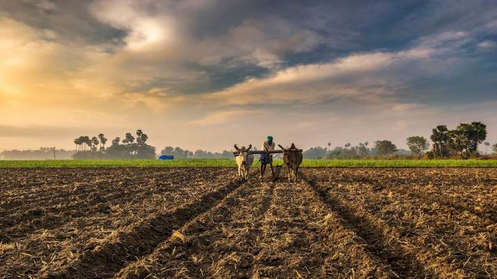 India's farm trade may rebound in second half of 2020: Fitch Solutions- India TV Paisa