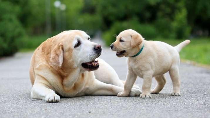 Bajaj Allianz launches pet dog policy- India TV Paisa