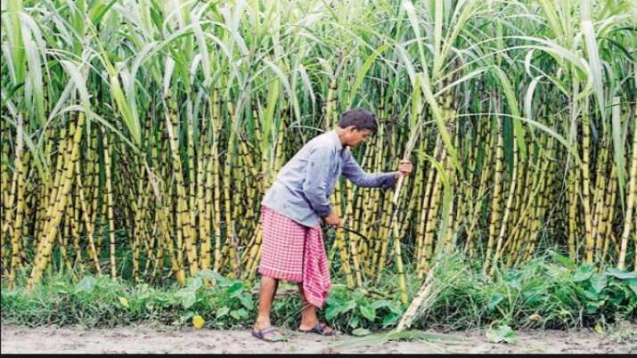 CCEA approves increase in sugarcane FRP by Rs 10 to Rs 285 qtil for 2020-21- India TV Paisa