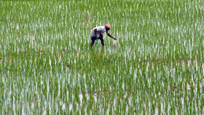 Newly passed farm bills will ensure sustainable, profitable future for farming community- India TV Paisa