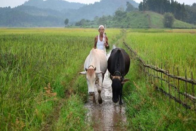 बजट में कृषि पर खास...- India TV Paisa