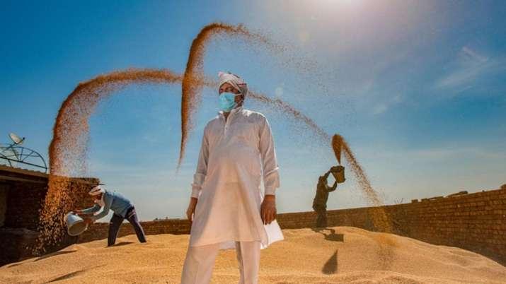 Wheat, Chana, Mustard, Barley, Masoor, MSP for Rabi...- India TV Paisa