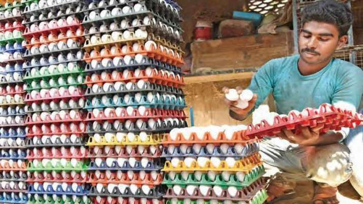 Wholesale price of eggs hits a record high before winter- India TV Paisa