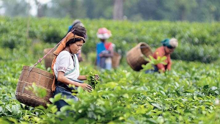 चाय निर्यातकों को इस...- India TV Paisa