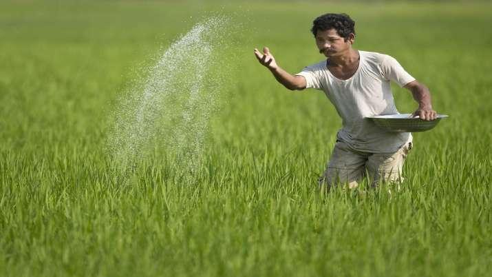 एक किसान  अपने खेतों में उर्वरक का छिड़काव करते हुए। - India TV Paisa