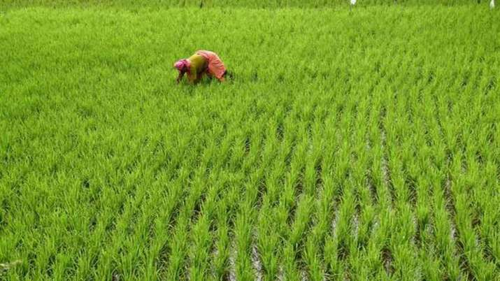 Rabi sowing satisfactory so far during COVID-19, acreage up 4 pc- India TV Paisa